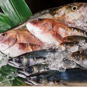 【毎日仕入れる絶品鮮魚】長浜魚市場直送!活鮮魚介♪